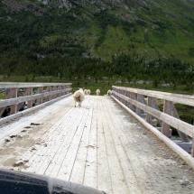 Noorwegen2009_278